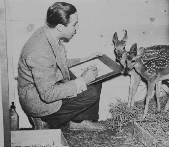 Уолт Дисней срисовывает образ Бэмби с настоящих оленей